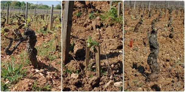 Chadronnay (Le Montrachet), Young Vine Pinot Noir, Old Vine Pinot Noir (La Romanee Conti)