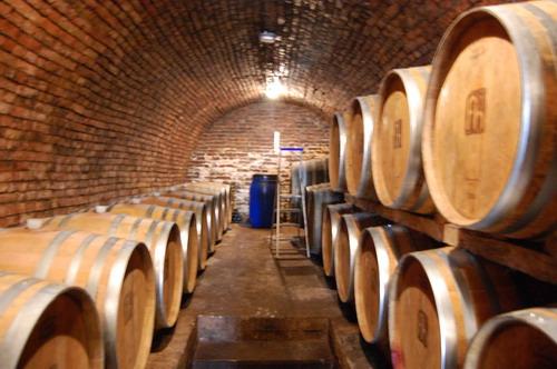 Peisaj underground cu vinurile ce vor sa vina
