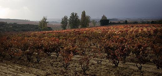 Vina Bosconia