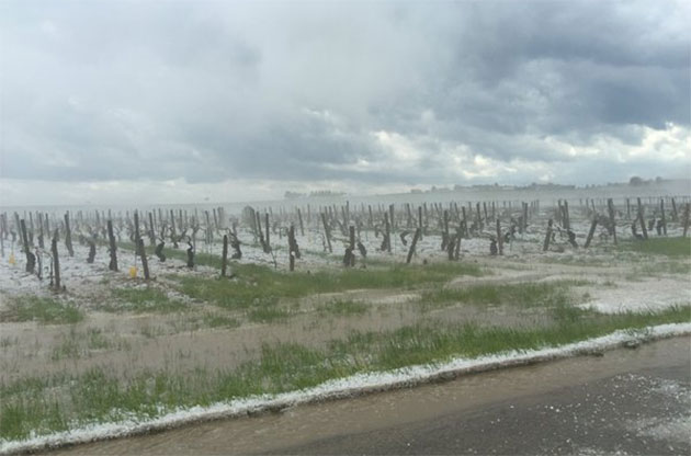 hail-in-chablis